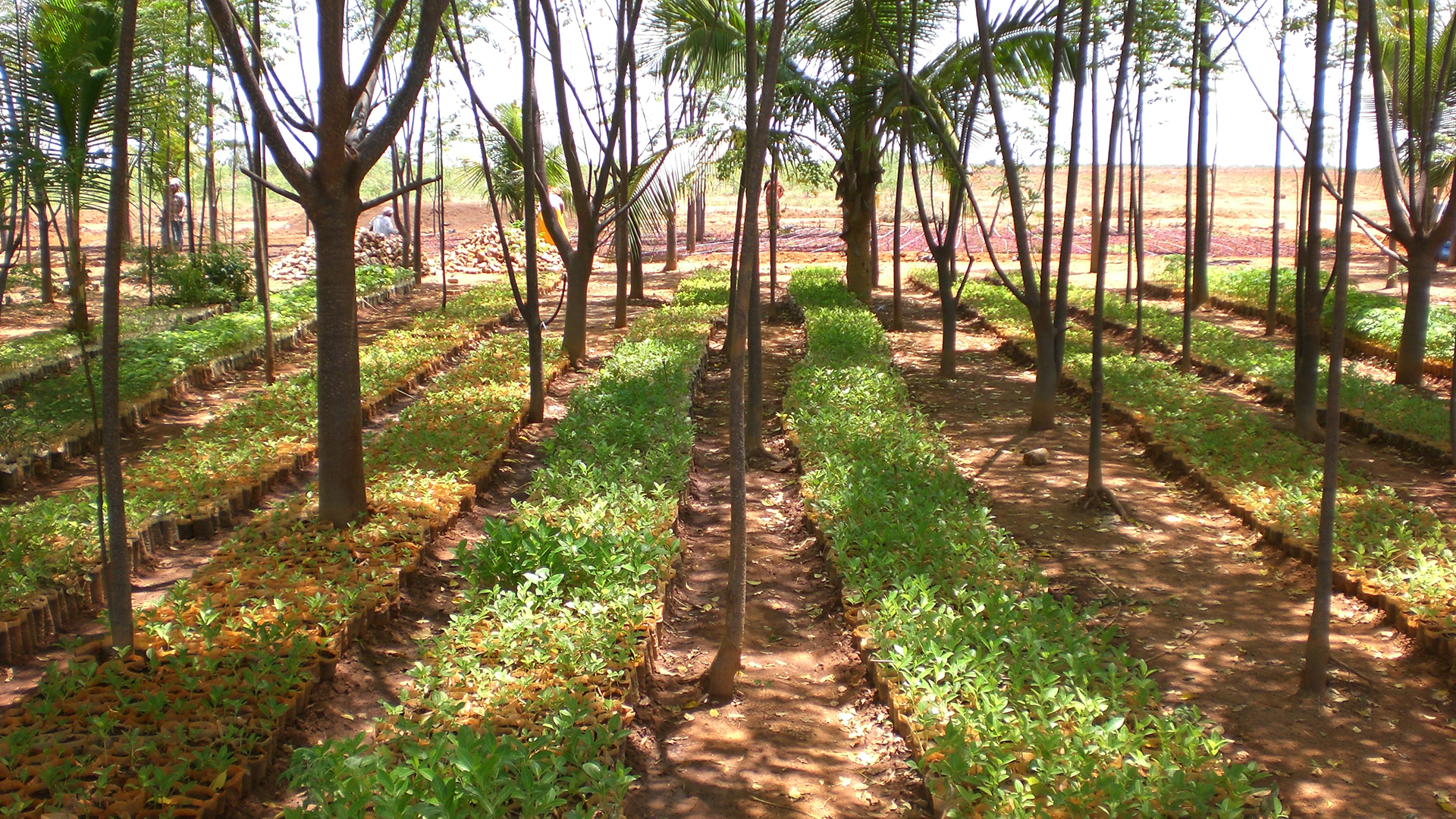 Basics of Successful Farming Business
